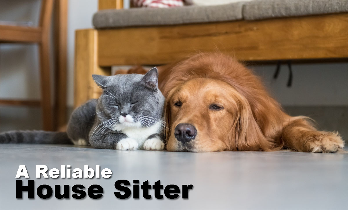 How To Find A Reliable House Sitter